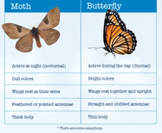 Identifying Moths and Butterflies