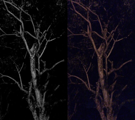 Night Tree 03